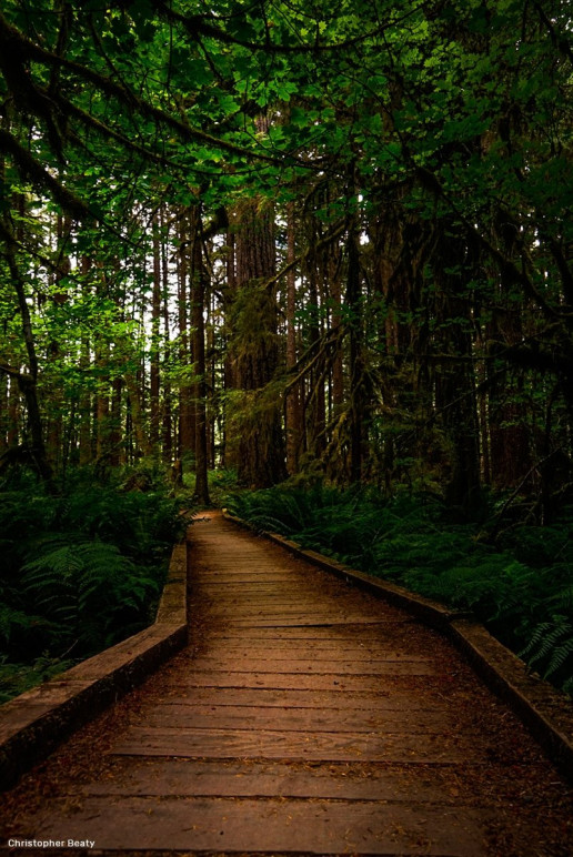 Ancient Forest Nature Trail - Photo by Christopher Beaty
