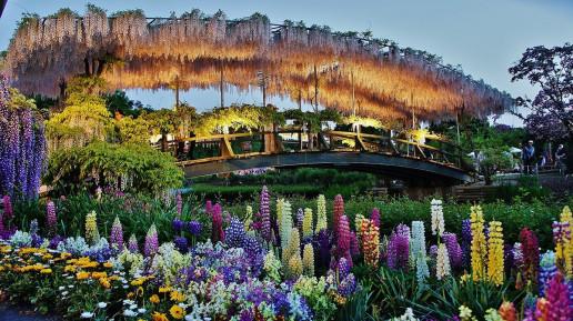 Ashikaga Flower Park - Photo by Manish Prabhune