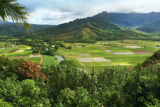 Hanalei Valley Overlook - Photo by Janine Sprout