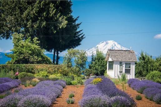 Hood River Lavender Farms - Photo by m01229