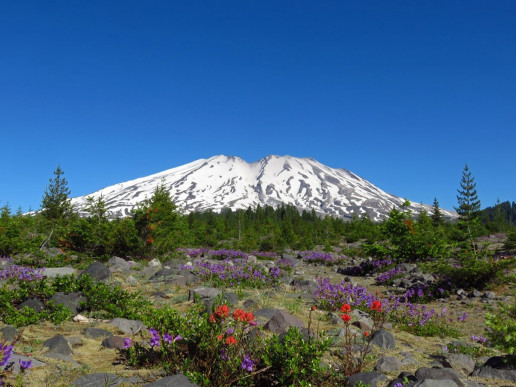 Lahar Viewpoint - Photo by Mt. St. Helens