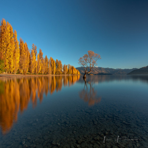 Lake Wānaka Lone Tree - Photo by Isaac Khasawneh