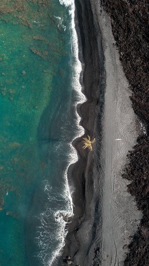 Lone Palm - Photo by Jeremy Bishop