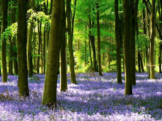 Savernake Forest - Photo by Brian Robert Marshall