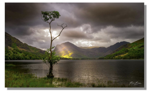 Buttermere Lone Tree by Richie Brown
