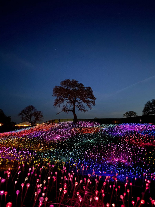 Field of Light - Photo by Kevin Lanceplaine
