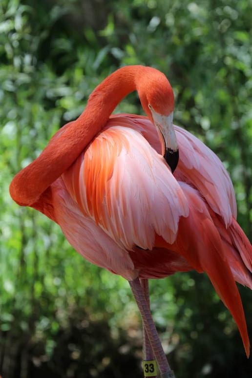 Sacramento Zoo - Photo by Alice Washington