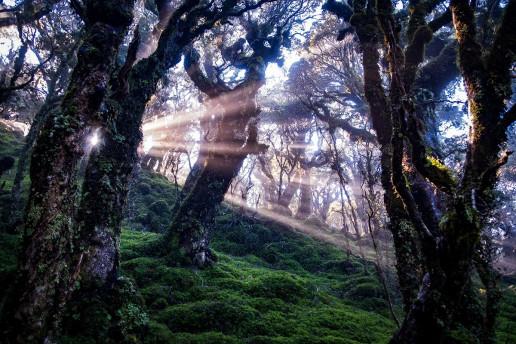 Tuatapere Hump Ridge Track - Photo by Sylvain Cleymans